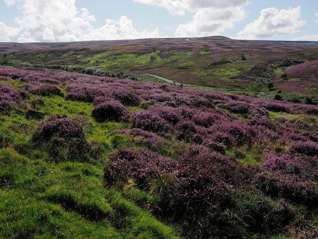 Ein Sammelsurium höchst heterogener Umweltgüter: das Cogden Moor (Bild: Kreuzschnabel/Wikimedia Commons, Lizenz: artlibre).